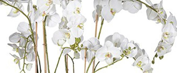 White Orchid Large