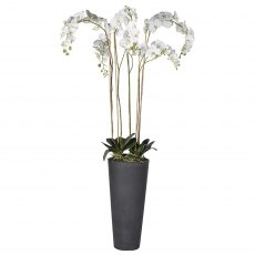 White Orchid Tall